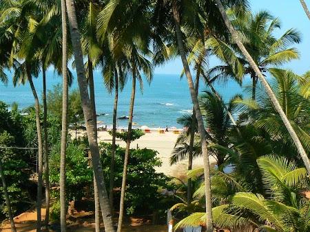 50. Palmieri si plaja in Goa