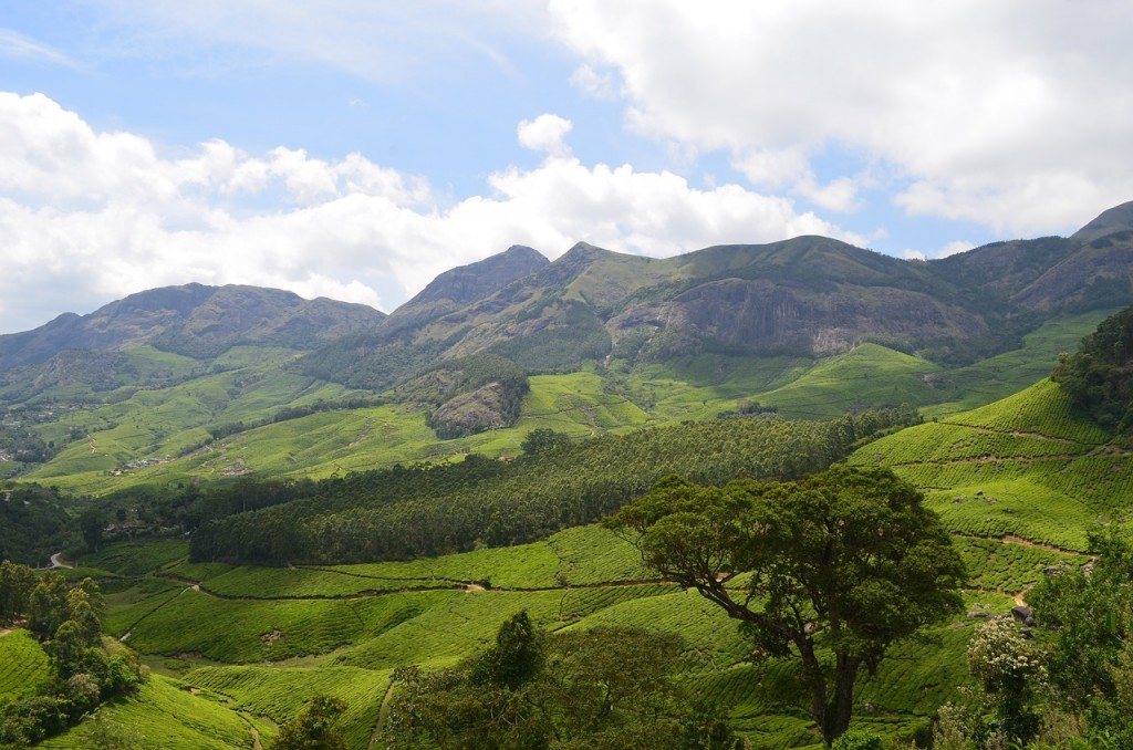 5 Amazing Things to Do in Munnar